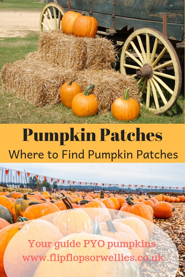 Where to Find Pick Your Own Pumpkin Patches pinterest pin