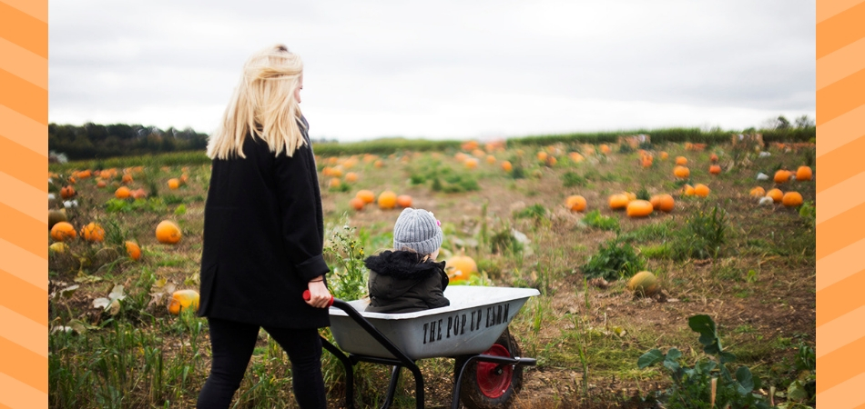 Where to Find Pick Your Own Pumpkin Patches