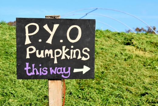 Where to Find Pick Your Own Pumpkin Patches Lifton Farm PYO sign