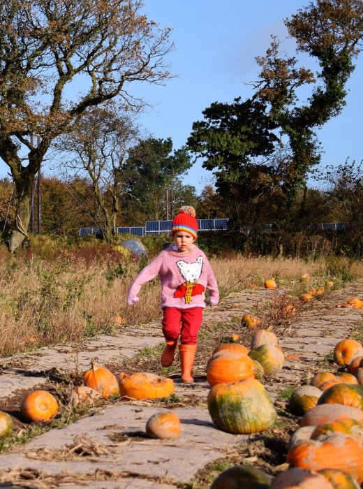 Where to Find Pick Your Own Pumpkin Patches Lifton Farm