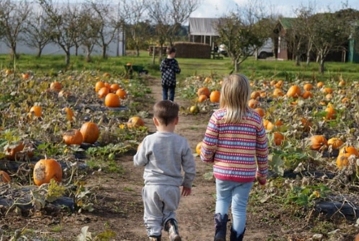 Where to Find Pick Your Own Pumpkin Patches Sopley Farm