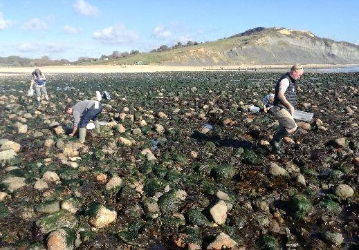 Best Rock pooling in Devon and Dorset Lyme Regis