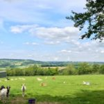 Family Friendly Short Walk in Somerset at Ferne Animal Sanctuary