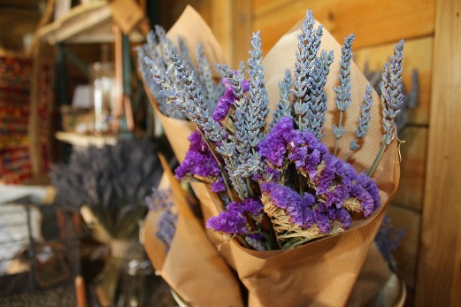 English Lavender Fields Somerset Lavender Farm shop
