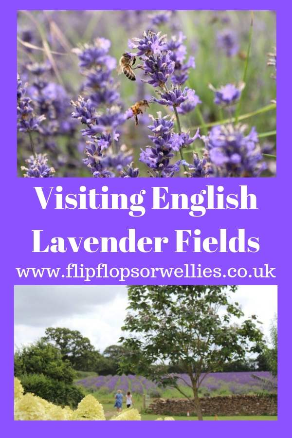 English Lavender Fields pin for later