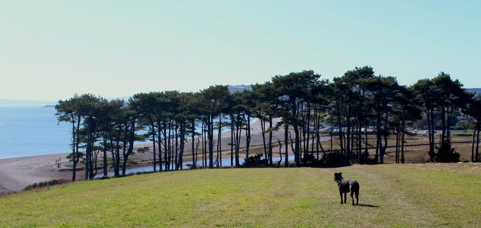 Coast Path Walk from Budleigh Salterton trees