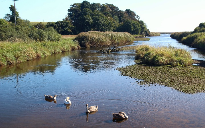 River Otter Estuary