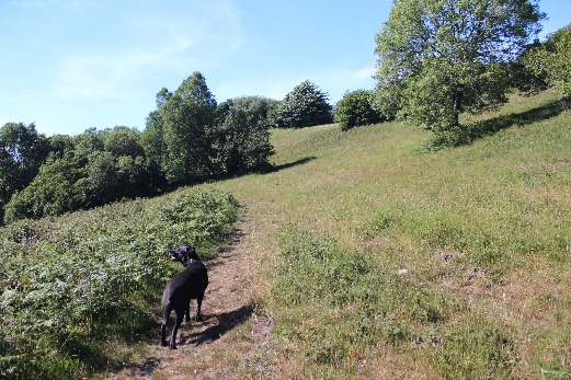 best walk near Honiton for Dogs